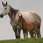 Broodmare and her young foal by MaryRVogt