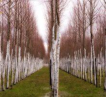 Willows by Vickie Burt
