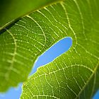 Fig leaf by Victoria Kidgell