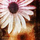 Daisy by Silvia Ganora