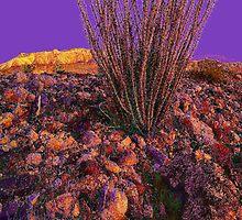 'Desert Vision' by DLUhlinger