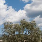 Olive tree by apo76