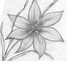 Lily,Pencil Drawing,  by MaeBelle