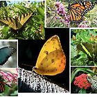 Rainbow Butterfly Collage by jensch8