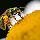Green Bee  by PamelaJoPhoto
