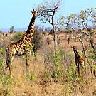 Giraffe and baby by Dan Shiels