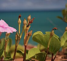 Flower on the coast by Elena Martinello