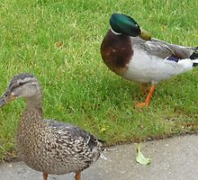 Mr. And Mrs. Mallard Ducks by Bea Godbee