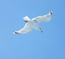 Seagull Ahoy by Laura Kelk
