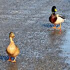 Ducks by Leif Holmberg