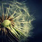 Dandelion by Cara Barron
