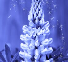 Sparkles of Blue Magic Lupine by Cathy  Beharriell