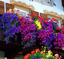 flowers and window by Daidalos