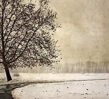 Wintry days by Milos Markovic