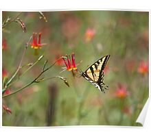 Swallowtail in Scarlet Dream Poster