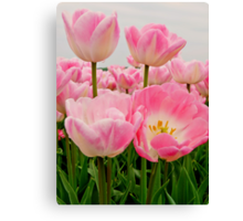 PINK CANDY TULIPS Canvas Print