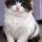That Darn Cat by mspfoto