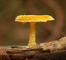 Fungi Season 34 by Normf