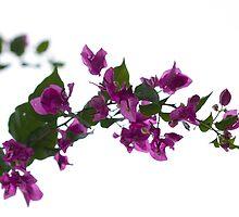 Flowers by Belle Farley
