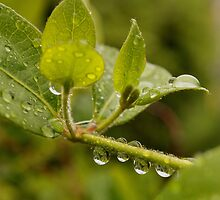Droplet 1 by boudicashots