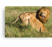Masai Mara Lions, Kenya Canvas Print