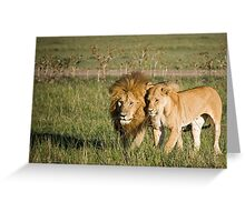 Lions, Masai Mara, Kenya Greeting Card