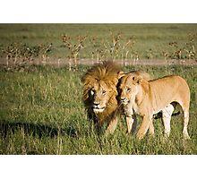 Lions, Masai Mara, Kenya Photographic Print