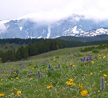 Bighorn Mountains by Dawne Olson