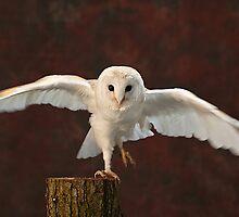 Taking Flight by Kayte