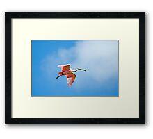 Flying Rosie 2 Framed Print