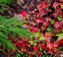 Red Leaves and Evergreens by Dana Roper