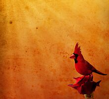 Cardinal by Cliff Vestergaard