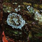 Opal lichen by Pollypocket