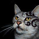 Ocicat Beauty by StarKatz