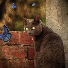 Madam Butterfly by TmacScapes