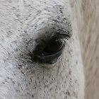 Horse Eye by stevedunkley