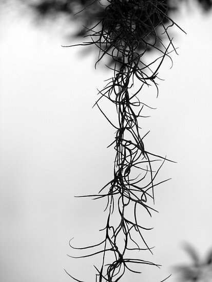 The Thorns of my Savior..  by Isa Rodriguez