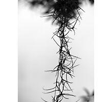 The Thorns of my Savior..  Photographic Print