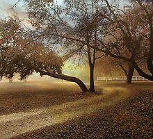 Serenity by Jessica Jenney
