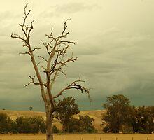 Naked Tree by Kamran Baig