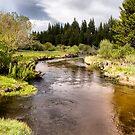 Trout Creek by Kimberly Palmer