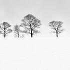 Lonely trees by frank Yule