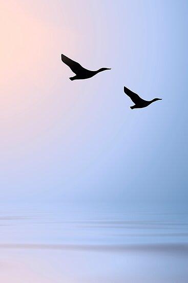 Birds at Sunset by Kimberly Palmer