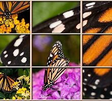Monarch Montage by Bonnie T.  Barry
