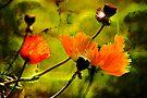 Painted Poppy by LudaNayvelt