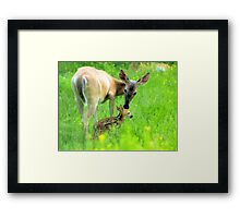 Kisses Framed Print