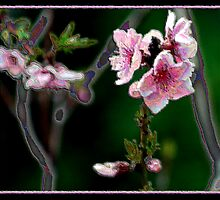 PAINTED FLOWERS by BOLLA67