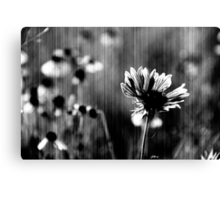 flowers of the damned Canvas Print