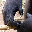 Gorilla Hands by ApeArt