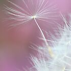 Make a wish by Melinda Gaal